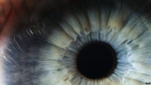 human cornea